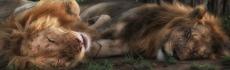 Sommeil animal : 5 comportements à copier