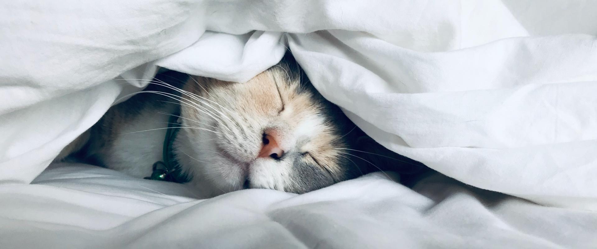 Le sommeil des Français - étude 2019
